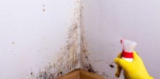 Fjernelse af skimmelsvamp