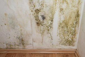 rengøring af skimmelsvamp