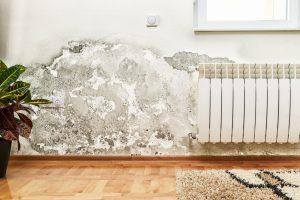 Skimmelsvamp på væg